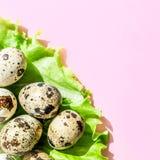 Huevos de codornices naturales en la hoja verde de la ensalada de la lechuga en fondo rosado Flatlay, visión superior, cuadrado  imagenes de archivo