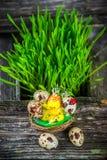 Huevos de codornices para Pascua Imágenes de archivo libres de regalías