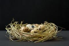 Huevos de codornices de Pascua en la jerarquía por los días de fiesta de Pascua En fondo negro Fotos de archivo