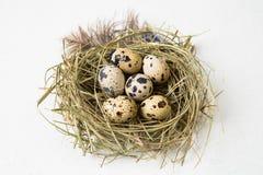 Huevos de codornices de Pascua en la tarjeta gretting de la jerarquía por los días de fiesta de Pascua En el fondo blanco Foto de archivo libre de regalías