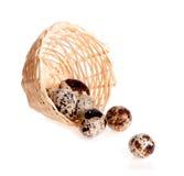 Huevos de codornices vertidos de la cesta Fotografía de archivo libre de regalías