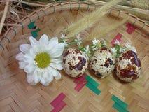 Huevos de codornices y floral en el fondo de bambú de la bandeja Fotografía de archivo libre de regalías