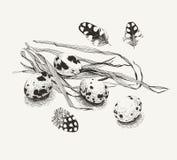 Huevos de codornices y un manojo de hierba Foto de archivo