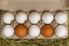 Huevos de docena pollos en cartón del huevo en el heno Visión arriba fotografía de archivo