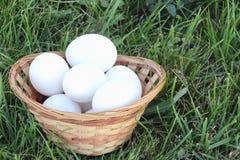 Huevos de gallina blancos en una cesta en una hierba Fotos de archivo