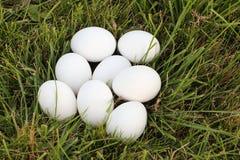 Huevos de gallina blancos en una hierba Fotos de archivo libres de regalías