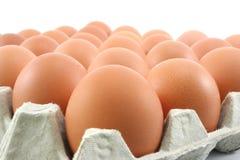 Huevos de gallina en el panel de papel en el fondo blanco Foto de archivo