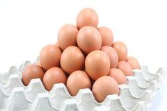 Huevos de gallina en el panel de papel en el fondo blanco Fotografía de archivo libre de regalías