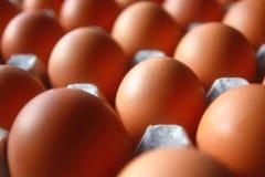 Huevos de gallina frescos en el envase de papel imágenes de archivo libres de regalías