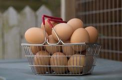 Huevos de gallinas libres de la gama en una cesta Imágenes de archivo libres de regalías