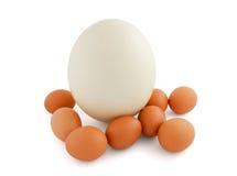 Huevos de la avestruz y del pollo aislados en blanco Foto de archivo libre de regalías