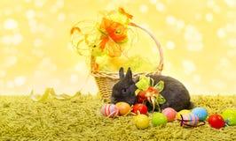 Huevos de la cesta del conejo y del día de fiesta de conejito de pascua foto de archivo libre de regalías