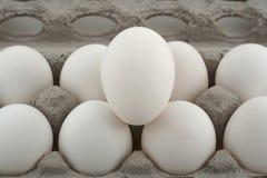 Huevos de la comida Imagen de archivo libre de regalías