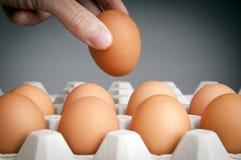 Huevos de la cosecha de la mano Foto de archivo libre de regalías