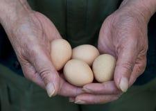 Huevos de la explotación agrícola del hombre Fotografía de archivo libre de regalías