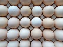 Huevos de la granja de pollo Foto de archivo