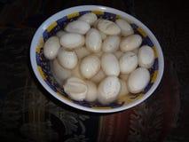 Huevos de la iguana fotos de archivo