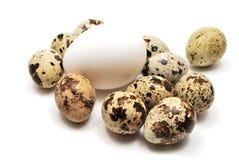 Huevos de las codornices y de gallina Foto de archivo