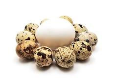 Huevos de las codornices y de gallina Imagenes de archivo