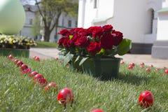 Huevos de las rosas y de Pascua Fotografía de archivo