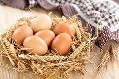 Huevos de los granjeros Imagen de archivo
