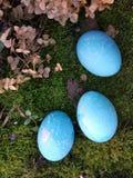 Huevos de Pascua azules que mienten en el musgo El concepto de colorante eggs con medios naturales o el fondo simplemente lindo d Imagen de archivo