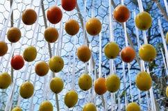 Huevos de Pascua colgados al aire libre Imagen de archivo
