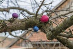 Huevos de Pascua coloridos en un árbol Foto de archivo