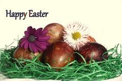 Huevos de Pascua con dos flores de la primavera Foto de archivo libre de regalías
