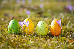 Huevos de Pascua con el azafrán Fotografía de archivo