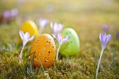 Huevos de Pascua con el azafrán Fotos de archivo