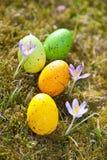 Huevos de Pascua con el azafrán Imagen de archivo