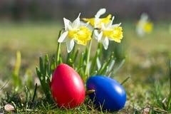 Huevos de Pascua con el narciso en primavera Fotos de archivo