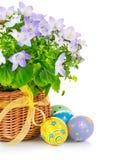 Huevos de Pascua con la flor de la primavera en cesta Imagen de archivo libre de regalías