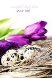 Huevos de Pascua con las flores púrpuras del tulipán Foto de archivo libre de regalías