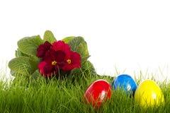 Huevos de Pascua con un primula rojo Imagen de archivo
