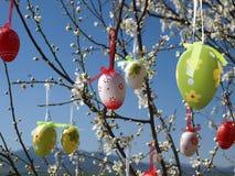 Huevos de Pascua en árbol Fotografía de archivo