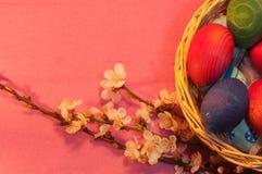 Huevos de Pascua en cesta con la ramita del albaricoque en rosa Imágenes de archivo libres de regalías