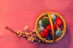 Huevos de Pascua en cesta con la ramita del albaricoque en rosa Imagen de archivo