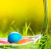 Huevos de Pascua en cesta en hierba Imagenes de archivo