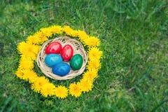 Huevos de Pascua en cesta en un césped de la hierba en una guirnalda de los dientes de león Copie el espacio Fotografía de archivo libre de regalías