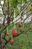 Huevos de Pascua en el árbol Imagenes de archivo