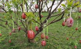 Huevos de Pascua en el árbol fotografía de archivo libre de regalías