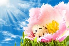 Huevos de Pascua en la flor del tulipán Fotografía de archivo