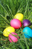 Huevos de Pascua en la hierba Fotos de archivo