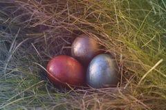 Huevos de Pascua en la hierba fotografía de archivo