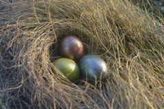 Huevos de Pascua en la hierba Imagen de archivo libre de regalías