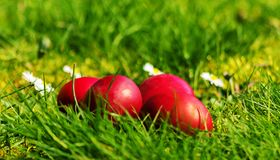 Huevos de Pascua en la hierba y las flores imágenes de archivo libres de regalías
