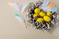 Huevos de Pascua en la jerarquía en fondo ligero Plumas dispersadas del color Tradicionalmente adornamiento del día de fiesta Fotografía de archivo libre de regalías