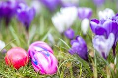 Huevos de Pascua en resorte Fotografía de archivo